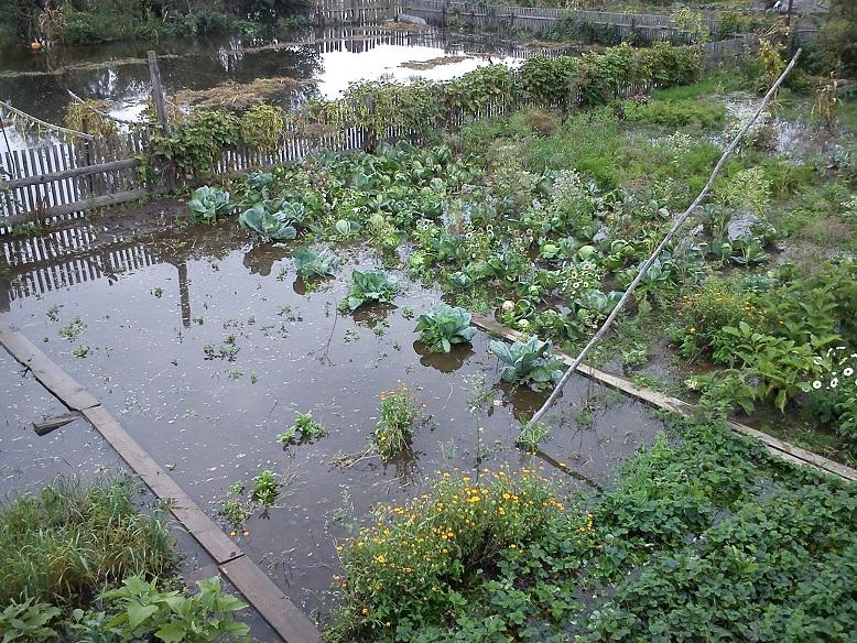 Во сне огород затопило